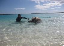 isla cerdos nadadores