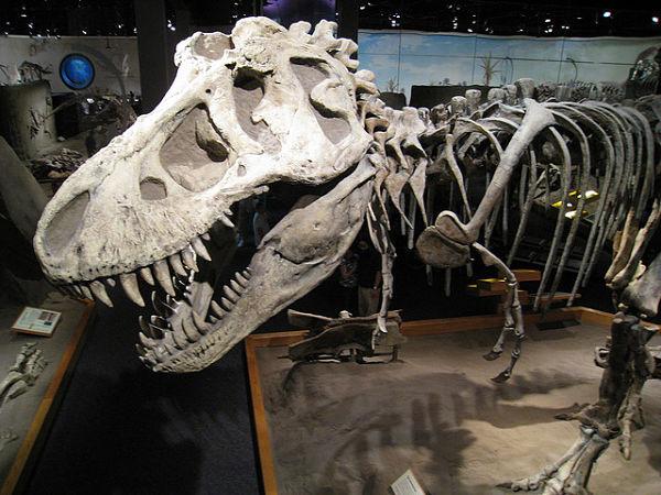 drumheller tyrannosaurus rex