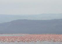lago nakuru kenia