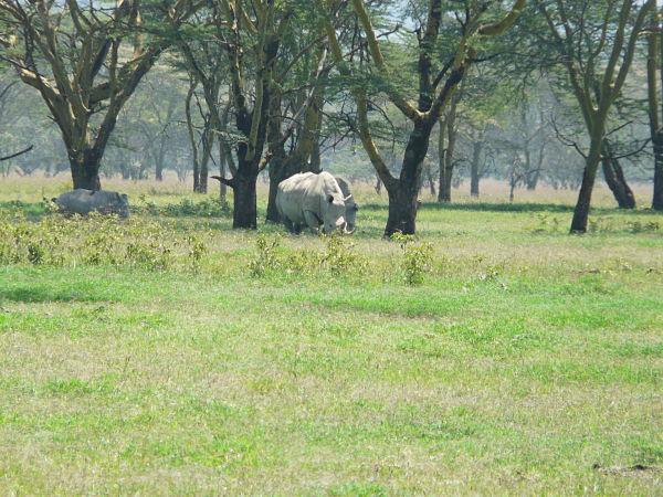 lago nakuru rinocerontes