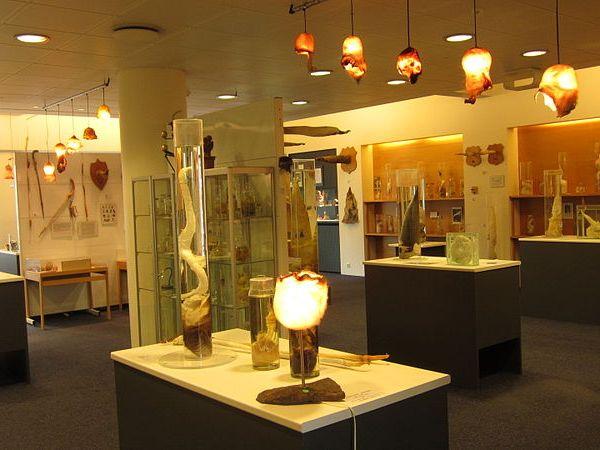 museo pene islandia Reykjavik