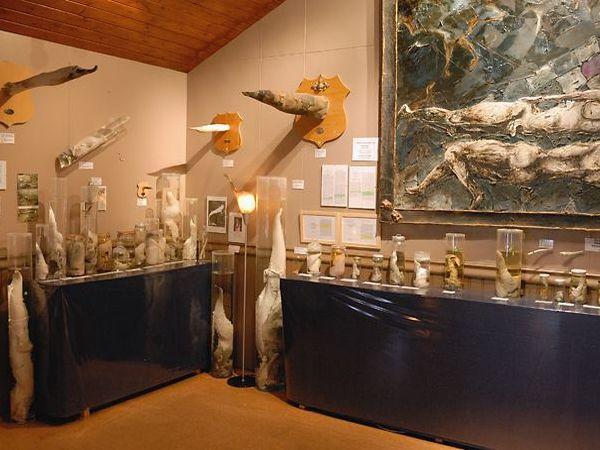 museo pene