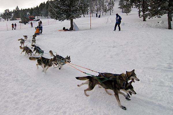 baqueira trineo perros