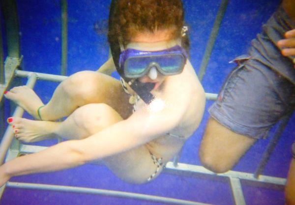 shark cage tiburones hawai