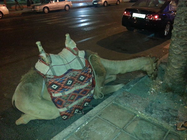 Jordania consejos viajar transporte